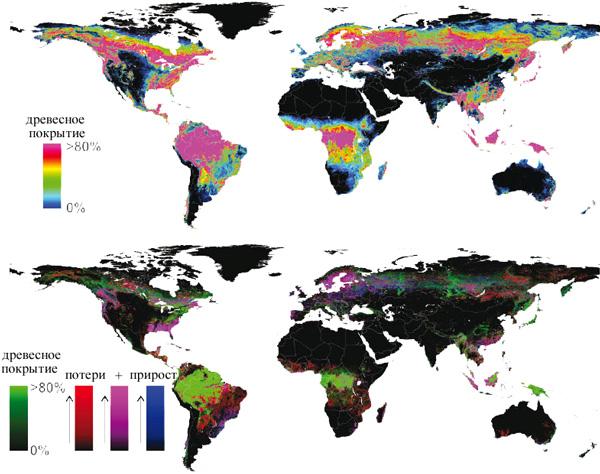 На верхней карте показано расположение глобальных лесных массивов вразличных климатических зонах— тропической, субтропической, умеренной исубарктической (бореальной). Нанижней карте кроме лесных массивов (зеленый цвет) отображены потери за 12 лет (красный цвет), прирост (синий) иоборот леса, то есть потери + прирост (фиолетовый). Карты из обсуждаемой статьи M. C. Hansen et al. вScience.