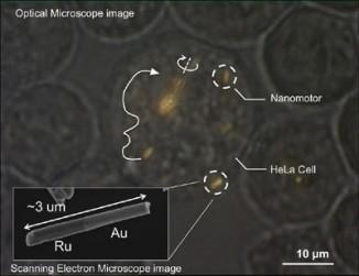 Изображение живой клетки снаномоторами