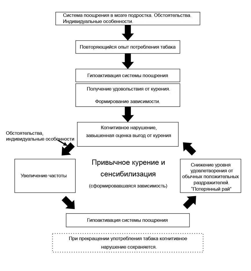 Схема формирования зависимости от табакокурения вмозге подростка.