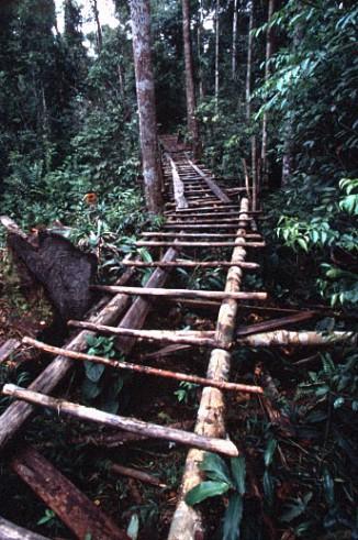 Kuda-kuda лесозаготовителей-нелегалов натерритории национального парка Gunung Palung, где живут 17% всех орангутанов мира.