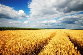 Причинами катастрофического снижения урожайности могут стать загрязнение атмосферы иводы, выветривание плодородного слоя почв, глобальное потепление, атакже снижение численности пчёл.
