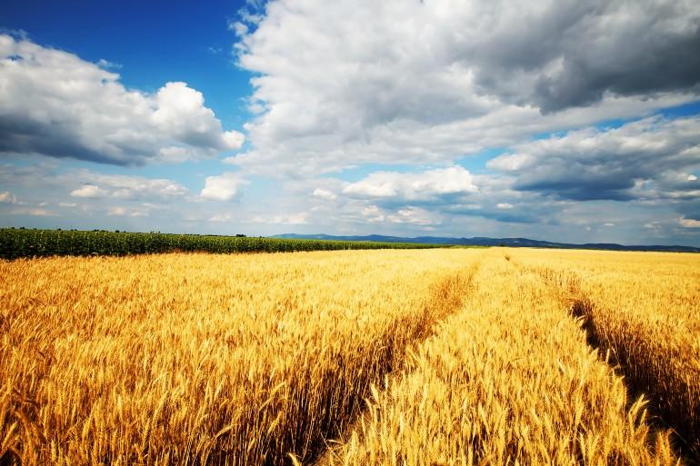 """Причинами катастрофического снижения урожайности могут стать загрязнение атмосферы и&nbsp;воды, выветривание плодородного слоя почв, глобальное потепление, а&nbsp;также <a href=""""https://22century.ru/ecology/4602"""">падение численности пчёл</a>."""