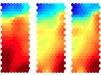 Тепловая карта, отражающая снижение активности специфичных аутореактивных CD4+ T-лимфоцитов под влиянием введения повышающихся доз аутоантигена-мишени. Изображение авторов