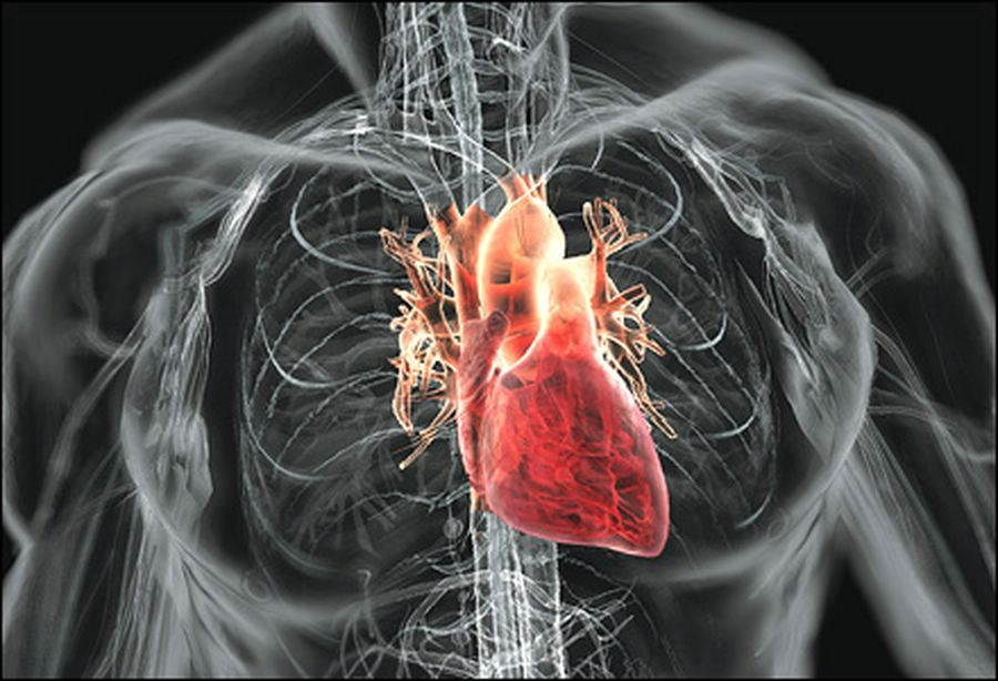 Основной проблемой трансплантологии является недостаток донорских органов.