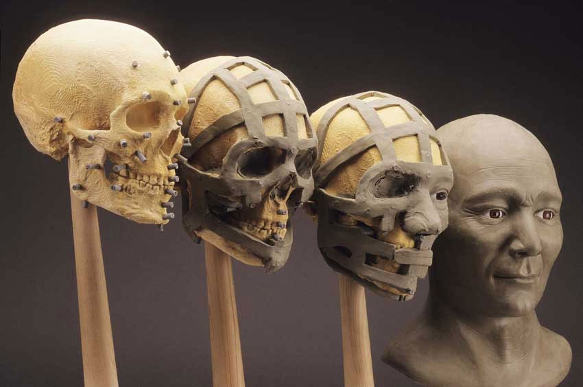 Реконструкция черт лица по черепу.