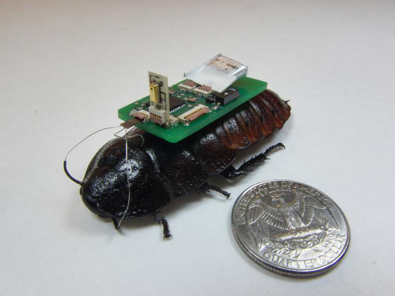 Исследователи университета Северной Каролины разработали технологию, которая позволяет тараканам-киборгам улавливать звук спомощью микрофона иискать источник звука. Технология разработана для поиска людей под обвалившимися врезультате катастроф зданиями.