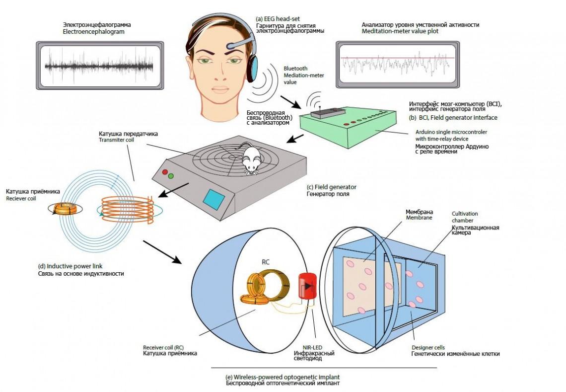 Беспроводной оптогенетический имплант.