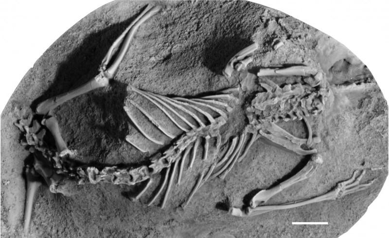 Останки одного из вымерших вместе сдинозаврами видов млекопитающих— <i>Asiatherium reshetovi</i>.