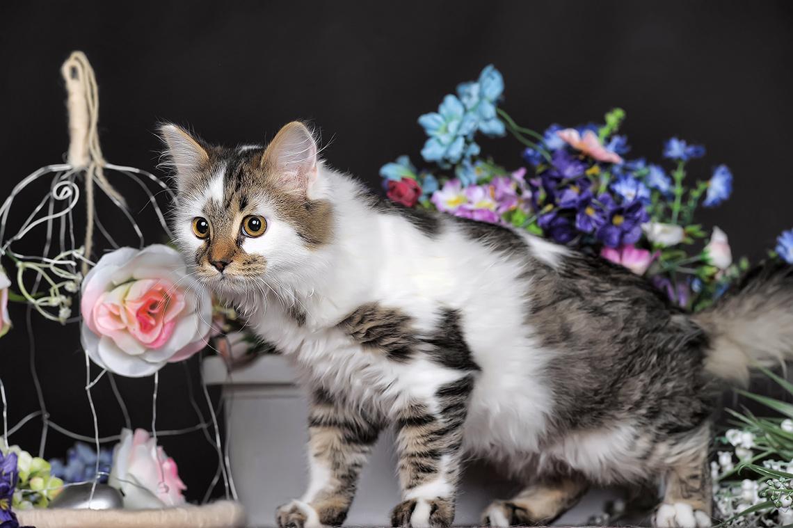Кошка ицветы