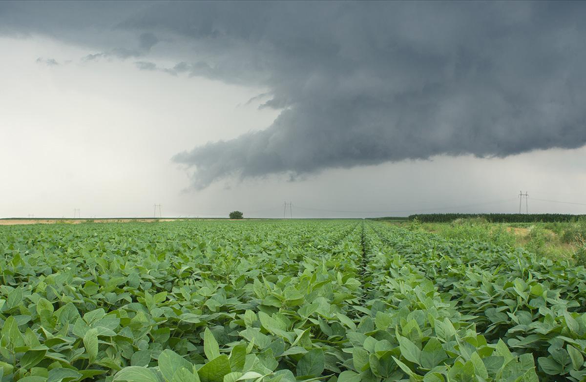 Продукция Monsanto защищена авторским правом. Фермеры, выращивающие разработанную этой компанией генетически модифицированную сою, должны платить компании, даже если используют для посева семена из собственного урожая. Такое положение дел неоднократно подтверждалось решениями суда.
