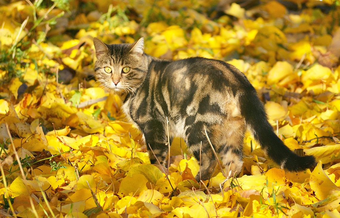 Кошка наосенней листве