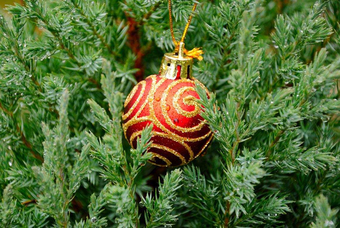 Геном вашей новогодней ёлки— практически тот же, что ина закате Мезозойской эры. Трусишка абелизавр серенький убегал от бежавшего трусцой тарбозавра мимо точно такого же дерева. Разве что без шариков.