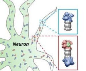 Нейрон ипротеасомы