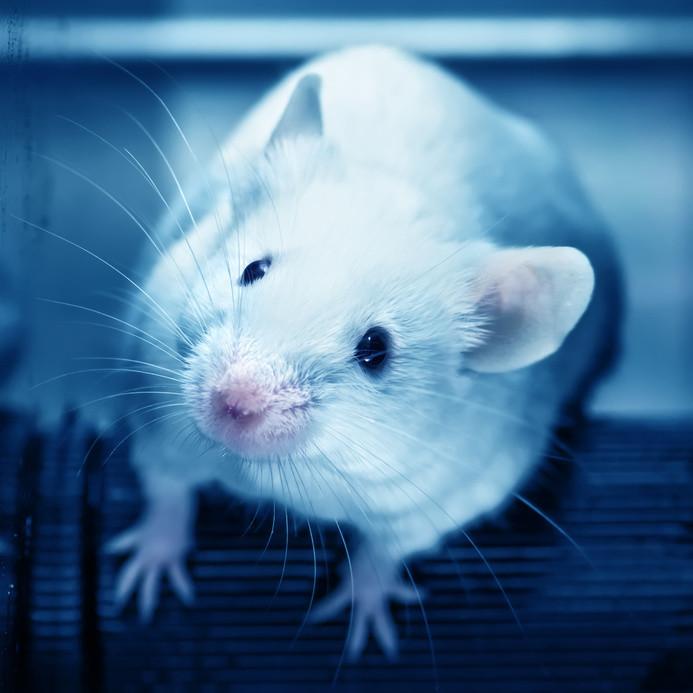 Лабораторная мышь.