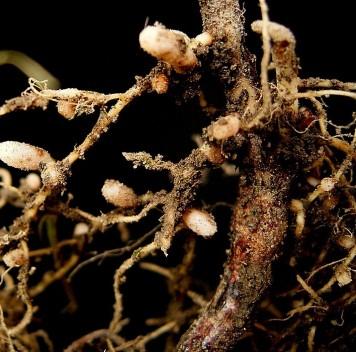 Избыток удобрений нарушает природный азотный цикл