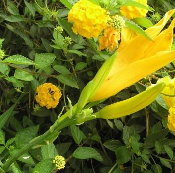 Растения имассовые вымирания