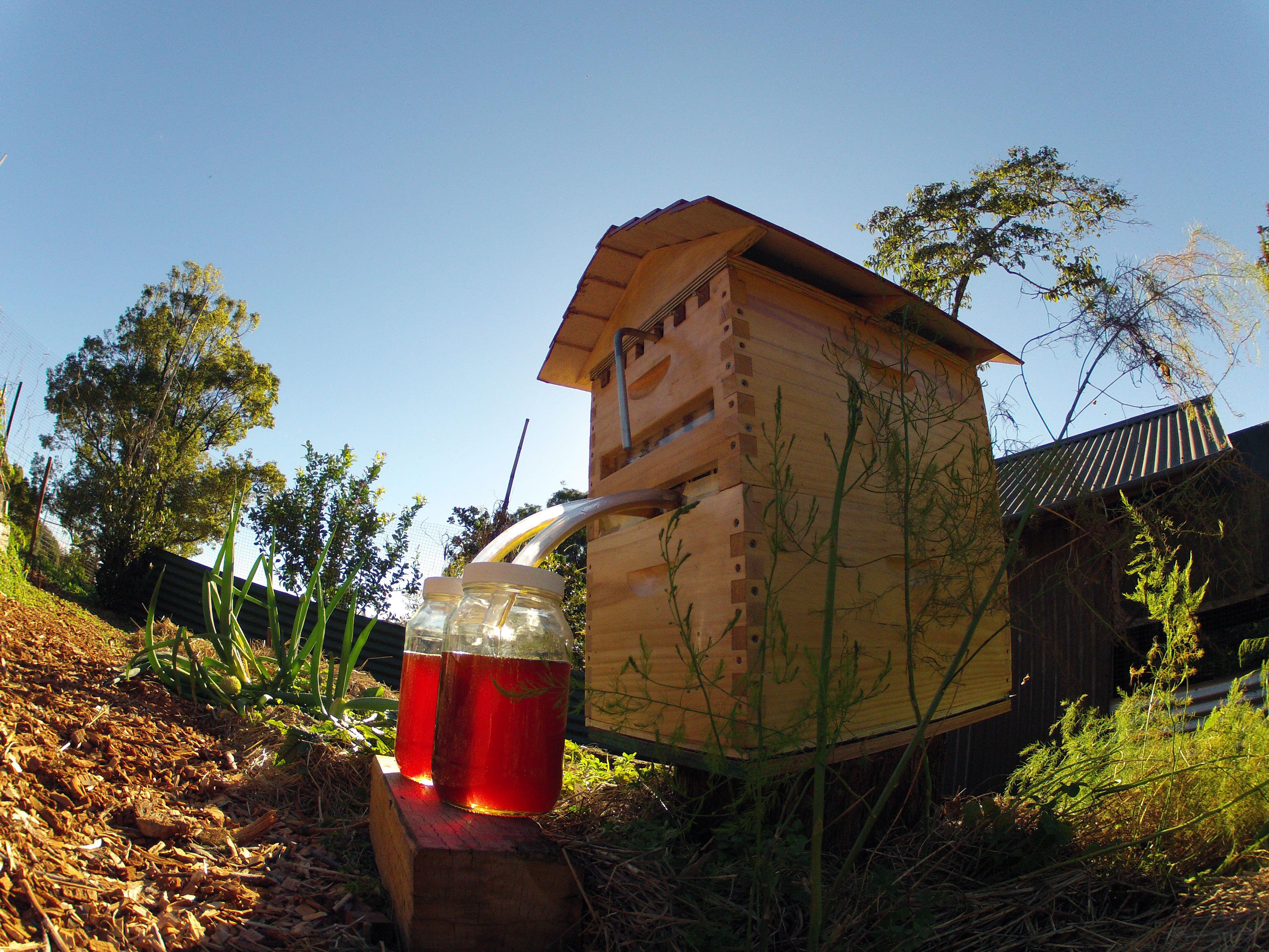 Конструкция улья нового типа позволяет забирать  мёд, не травмируя пчёл.