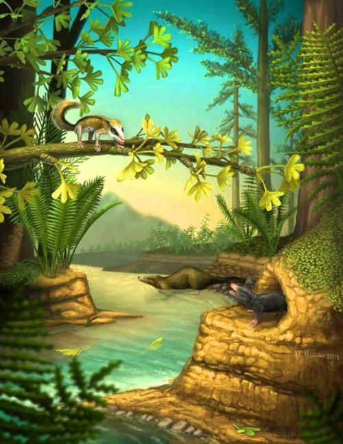 Ранние млекопитающие, реконструкция