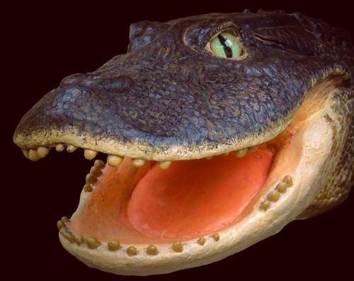 Реконструкция головы Gnatusuchus pebasensis.
