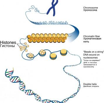 Наследственная информация хранится нетолько вДНК