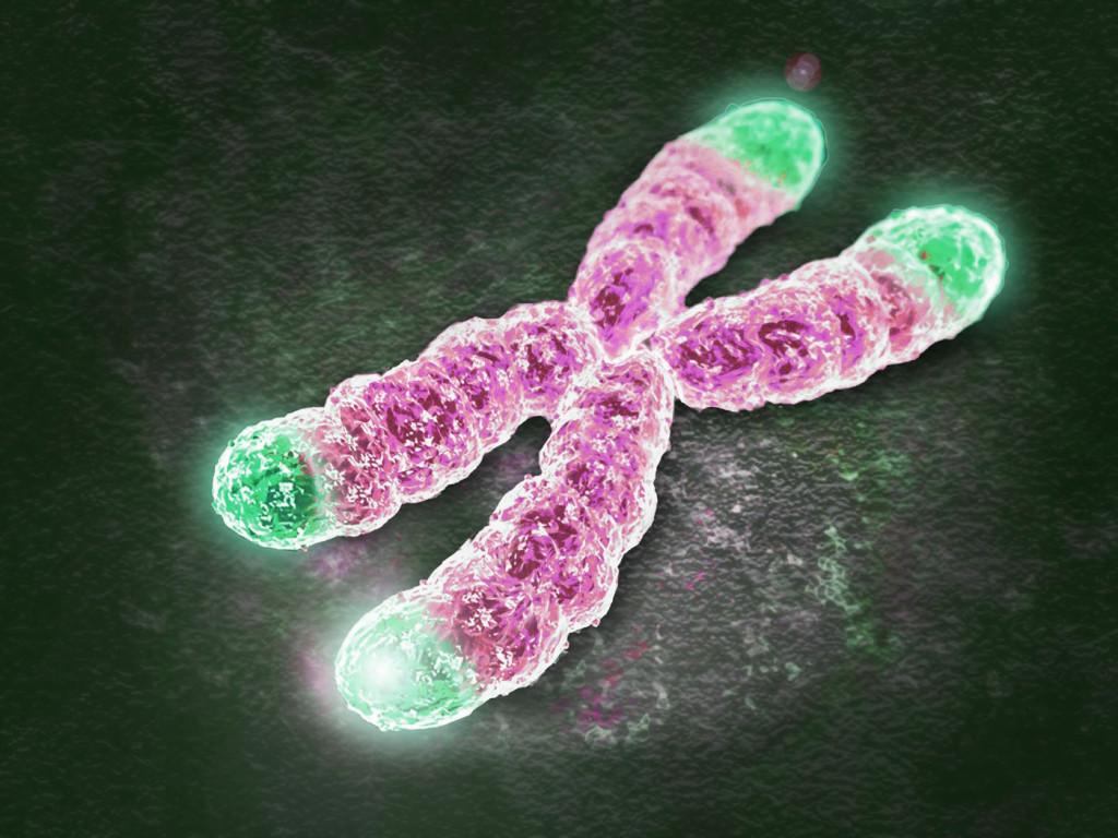 Изображение хромосомы стеломерами.