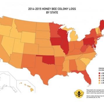 В США за год погибло более 40% пчелиных семей