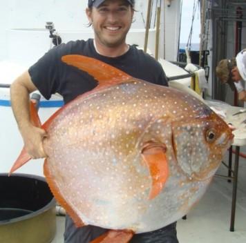 Теплокровная глубоководная рыба
