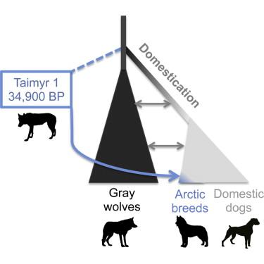 Эволюция собак иволков