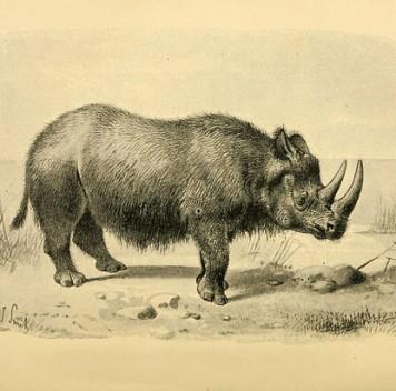 Как носорог побывал птицей
