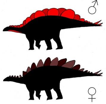 Половой диморфизм стегозавров