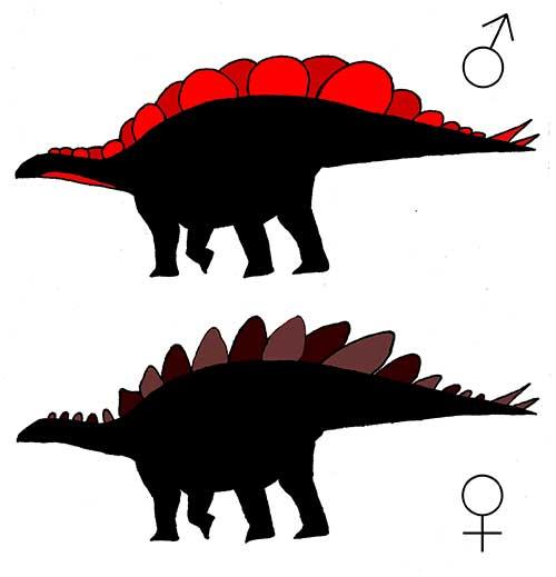 Стегозавр. Самец исамка.