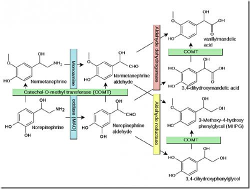 Рисунок 1. Схема метаболизма норадреналина.