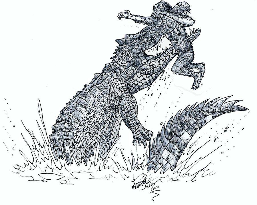 Крокодил нападает нахабилиса