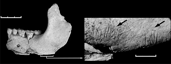 Челюсть из пещеры Эль-Сидрон сцарапинами от каменных орудий