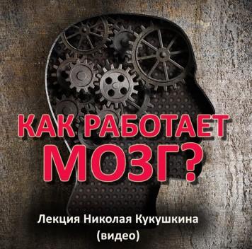 Николай Кукушкин. Как работает мозг