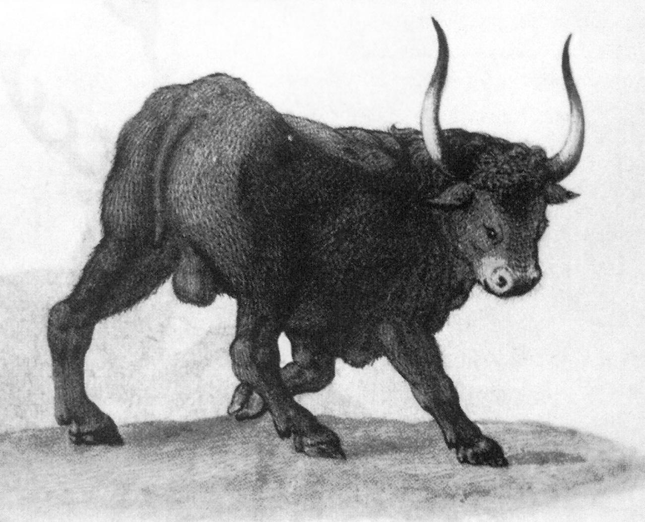 Тур. Рисунок Теодоро Гизи. XVI век