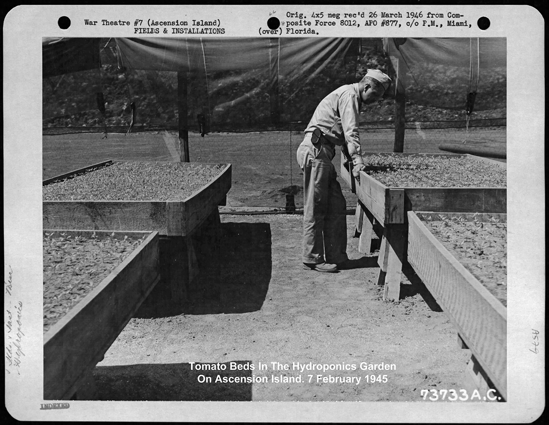 Гидропоника наострове Вознесения. Февраль 1945 года