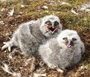 На острове Белый появились южные виды животных