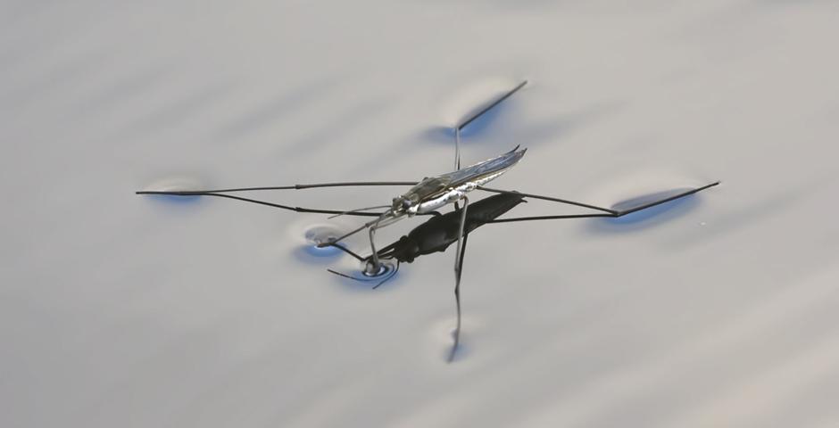 Робот входе выполнения тестовых прыжков выдерживал нагрузку— 13,8 <i>g</i>  (<i>g</i>— ускорение свободного падения наповерхности Земли); отмечается, что при старте космического корабля космонавты испытывают перегрузку в3—5<i>g</i>, апассажиры самолёта навзлёте— 1,5<i>g</i>.