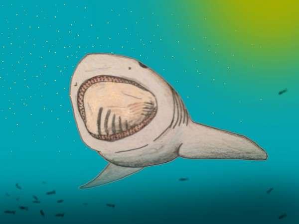 Древняя акула, реконструкция внешнего вида.
