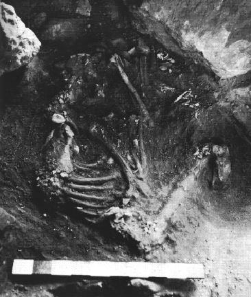 Погребение Шанидар IV. Источник: : Leroi-Gourhan 1975, p. 562.