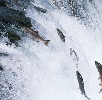 Первые американцы рыбачили уже 11 тысяч лет назад