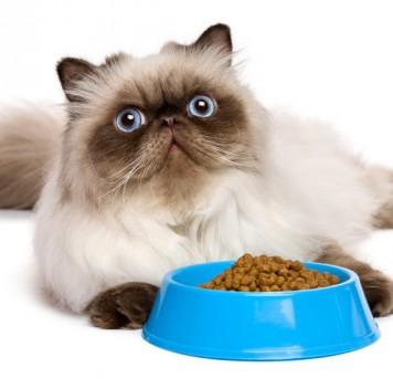 У кошек сохранились рецепторы горького вкуса