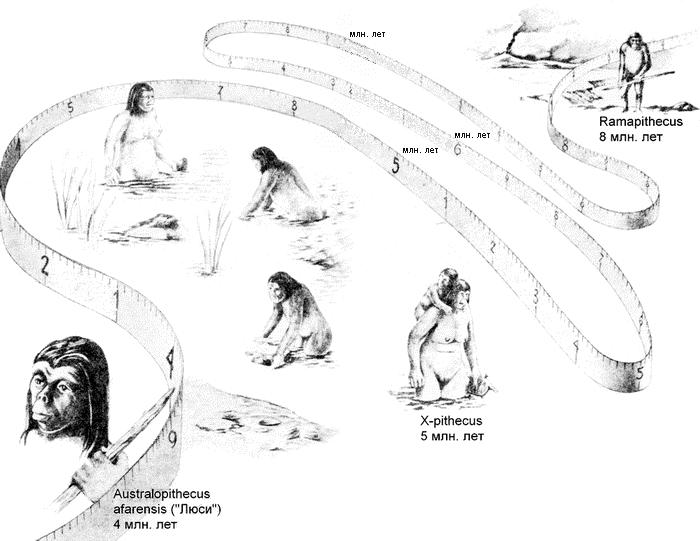 Так представлял себе эволюцию человека Ян Линдблад (Jan Victor Armas Lindblad). Иллюстрация из книги «Человек— ты, я ипервозданный»