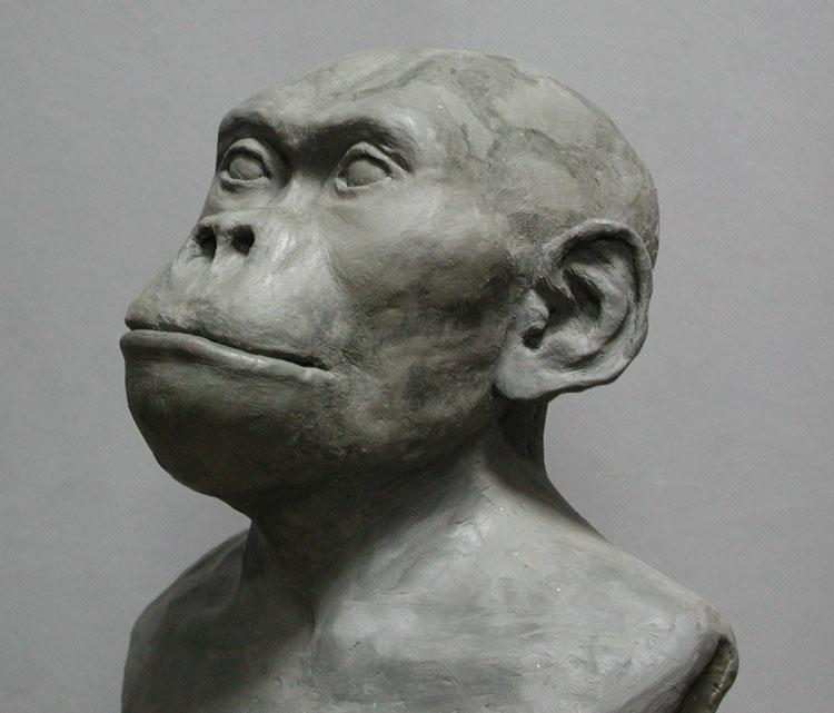 Человек умелый (череп OH 24). 1,8млн. лет назад. Реконструкция О.М.Григорьевой. Выступающий нос?