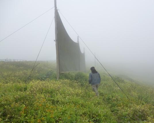 «Ловители влаги». Латинская Америка