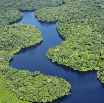 «Лёгкие нашей планеты», или Как душить людей иживотных спомощью растений