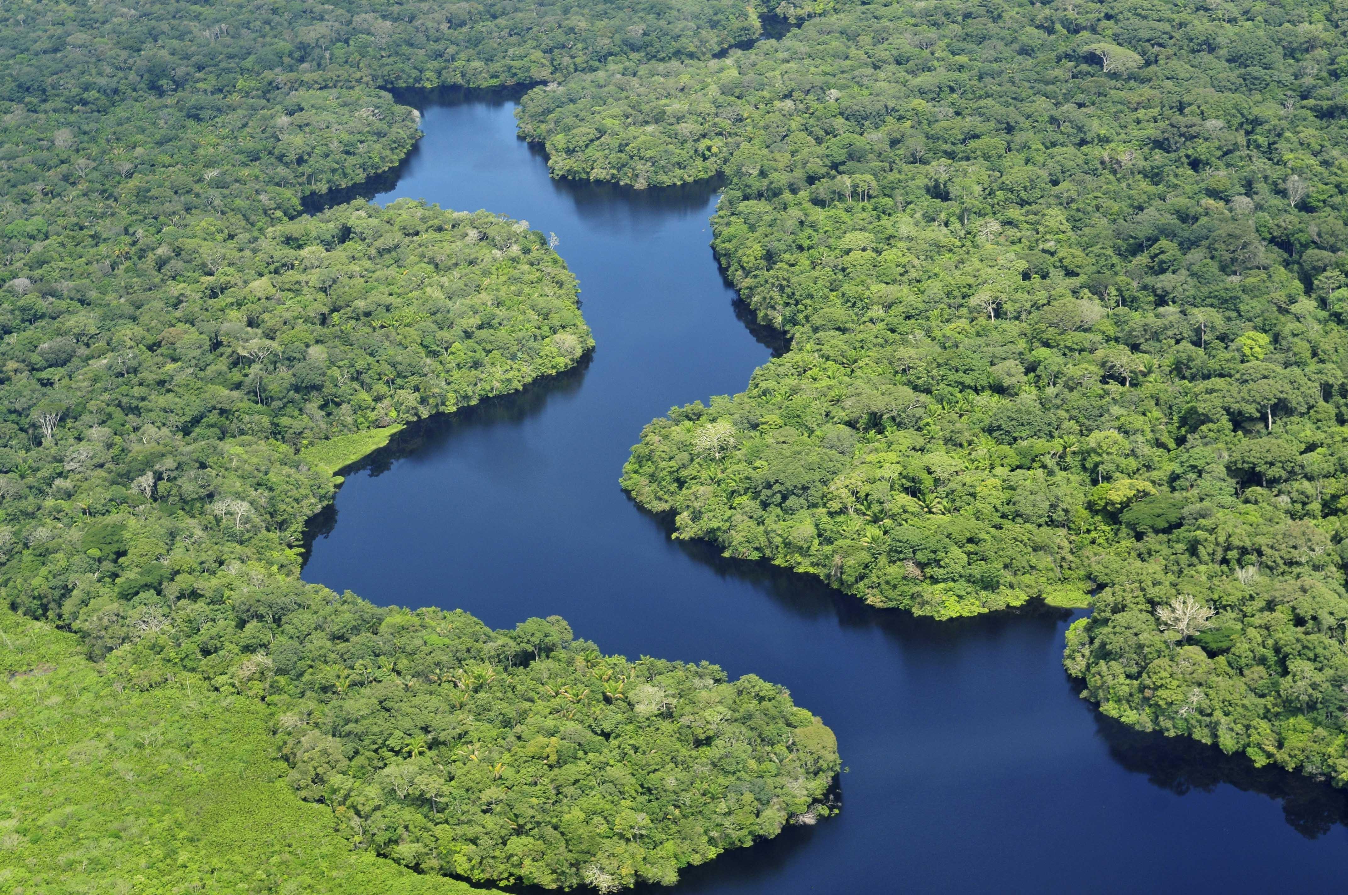 Амазонский тропический лес. Источник: Neil Palmer