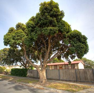 Деревья всистемах биофильтрации