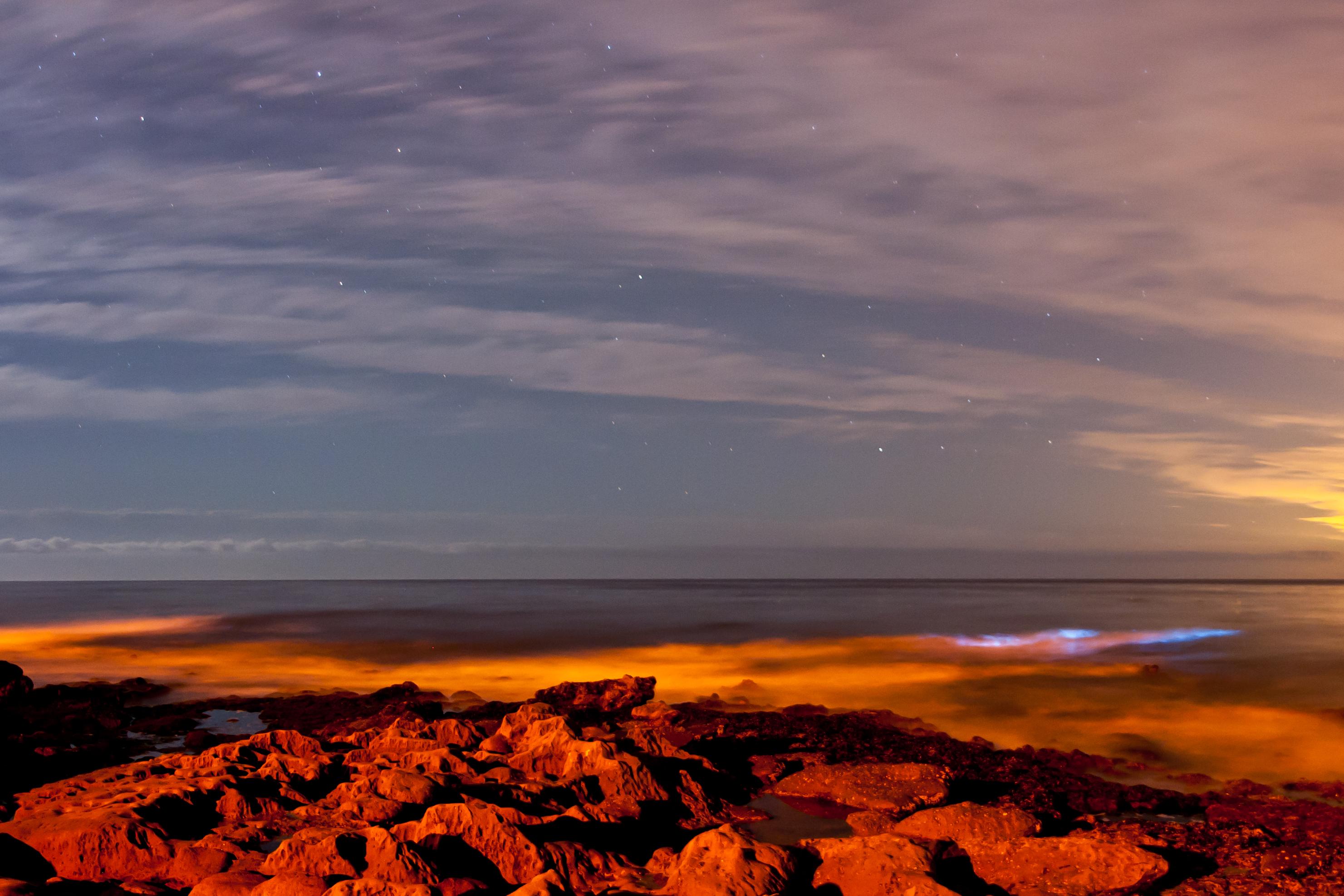 Некоторые виды фитопланктона содержат пигменты, оттенки которых варьируются от красного до коричневого цветов. Цветение таких организмов называют «красным приливом». Нафото: цветение Lingulodinium polyedrum уберегов Сан-Диего. Источник: Flickr